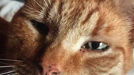 Dexter has his teeth sorted out, thanks to the generosity of St Albans cat lovers.