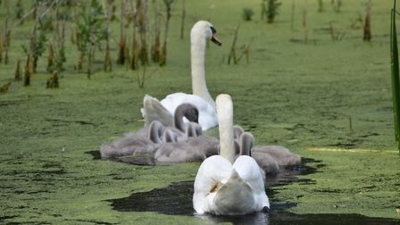 Peter Naylor took this pic at Paxton Pits in St Neots