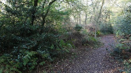 Bricket Wood Common is one of the area's main attractions. Picture: Danny Loo