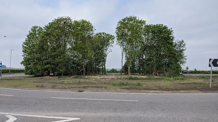 Rook nests were damaged after trees were felled on the A505 roundabout in Royston earlier this year.