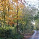 Ayot St Lawrence is a peaceful location. Picture: Archant