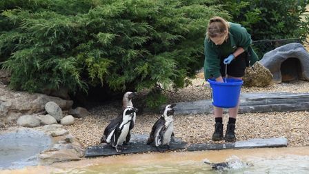 Whipsnade Zoo, 2020. Picture: Amy Thorburn