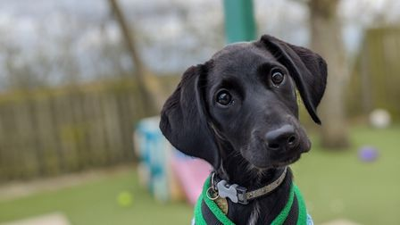 Wood Green in Godmanchester is asking people to think carefully about taking on puppies.