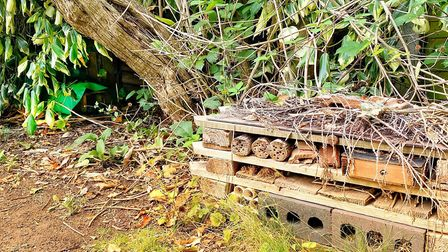 Richard's bug hotel has been a bigger hit than his hog house this summer. Picture: Richard Burton