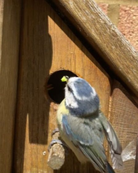 Richard picked up his birdbox from Center Parcs six years ago and it's still going strong. Picture: