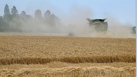 Harvest at Wood Farm in Hail Weston has been completed early this year.