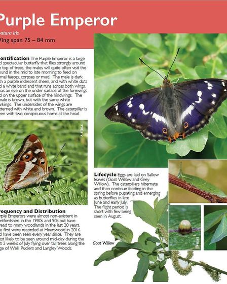 A new butterfly guide has been published for visitors of Heartwood Forest. Picture: Butterfly Conser