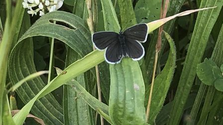The guide displays up to 30 species of butterfly which can be found at Heartwood Forest. Picture: Ma