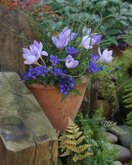 5. Plant autumn-flowering crocus in your pots now, under other plants, and they should be flowering