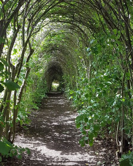 Madingley Hall Garden tunnel leading to herb garden. Picture: Hannah Jackson