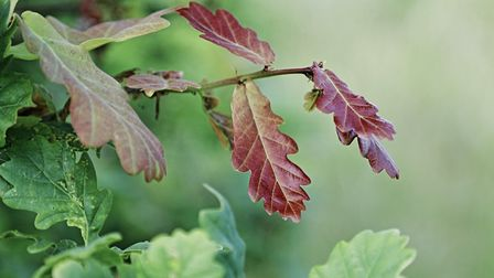 Grove House photography competition. Leaves in Heartwood Forest by Steve Davies