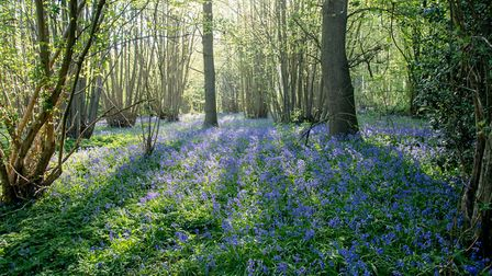 Grove House photography competition. Heartwood Forest by Pete Adkins