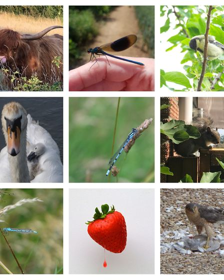 There was lots of variety for summer 2020 Hunts Post Photographic competition.