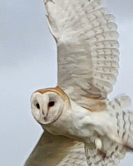 Daniel Heathcote's image of a barn owl at Manae RSPB Ouse Washes.