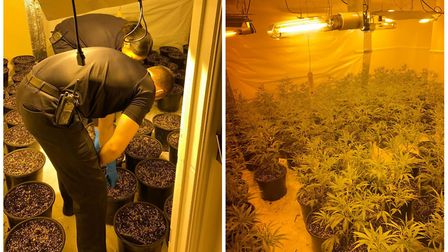 Cannabis farm worth up to £310,000 raided in Alconbury. Picture: CAMBS POLICE