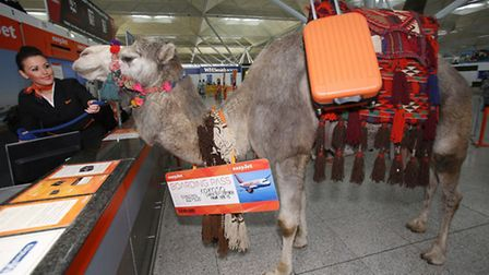 easyJet launched its new service to Sharm el Sheikh this week.