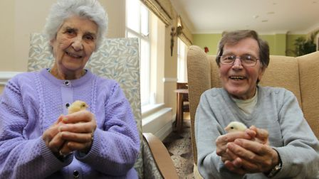 Violet Adams and Trevor Smith are pictured with chicks at Foxholes care home