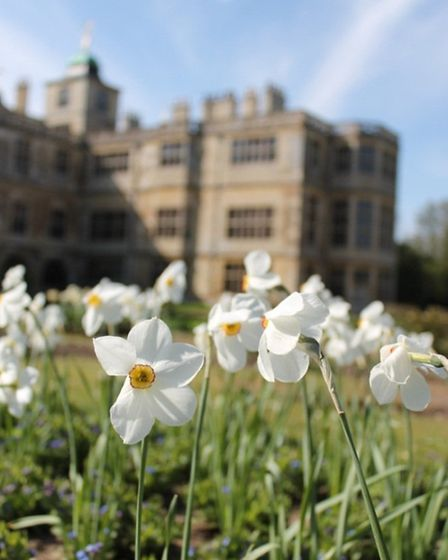 Audley End flowers
