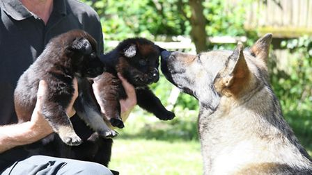 Some of the pups with their mum Steffi