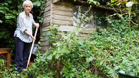 Audrey Bazley's shed was rotting and covered in overgrown ivy before receiving a makeover from top f