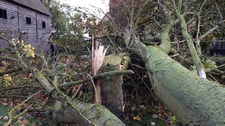 A example of the destruction caused by St Jude's storm in Saffron Walden. Picture: Alison Whitfield
