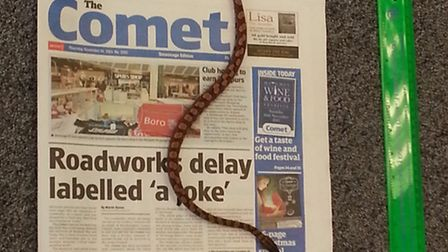The snake placed against last week's Comet and a 30cm ruler