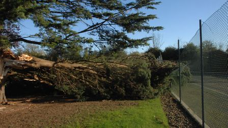 Storm St Jude left devastation in its wake in October. Ted Welch, of Witchtree lane, Hempstead, woke