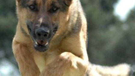 Essex Police has announced cuts to its dog-handling unit as part of a programme to deliver £36m wort