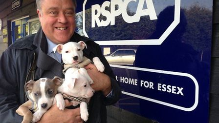 Richard Howitt with puppies Tilly, Archie and Lottie at an RSPCA animal home in Wethersfield near Br