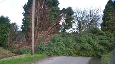 A tree blocks the road between Radwinter and Wimbish Green following Valentine night storm. Picture: