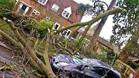 A tree came down in Shephall Lane in Stevenage following the storms. Credit: @careertraveller