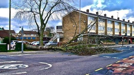 A tree came down in Broadwater Crescent in Stevenage following the storms. Credit: @careertraveller