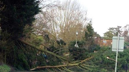 Rectory Lane was blocked after trees came down in the storm. Credit: Andrew Lambert