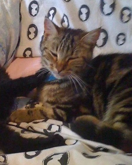 Three-year-old tabby Oscar (right) died three weeks ago from suspected antifreeze poisoning