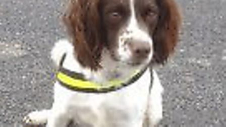 Police dog TJ sniffs out £63,500 worth of drugs and cash in his first four months.