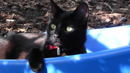 Jet, a black male cat, died on April 11 from suspected antifreeze poisoning