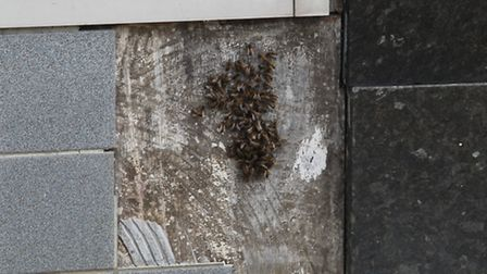 The bee have created a hive in the wall