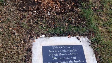 The tree which was planted by North Herts District Council to mark the birth of HRH Prince George of