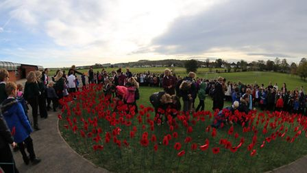 More than 1,000 poppies were made by pupils at Hartsfield Primary School in Baldock.