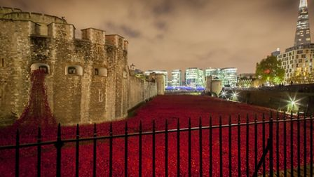 Tower of London poppies. Picture: Joe Higham's Reportage