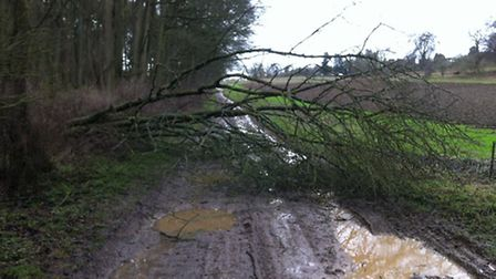 The tree which stood in my way near between Lilley and Luton.