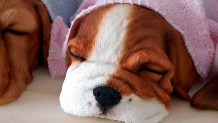 Laura was awarded a Gold Award for her Sleeping Puppies cake, which took 27 hours to make.