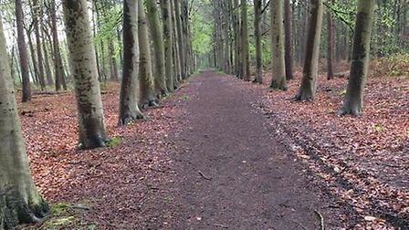 The spot in Shrewsbury Forest near Ypres in Belgium where soldier Walter Flanders died after being h