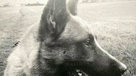 Police dog Tai from the Beds, Cambs and Herts unit helped detain the two teenagers.