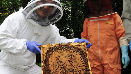 Reporter Oliver Pritchard with one of the plates from the hive