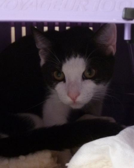 Xiang was found in Benington in a box in a shed and is on the RSPCA's website for rehoming as his o