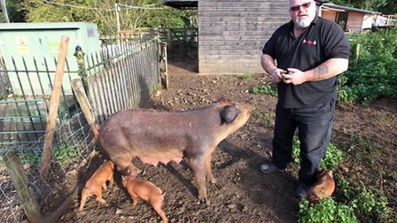 Ian 'Tank' Brian with his pigs