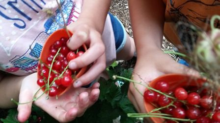 Cookery eatery sessions for children at Hitchin's Triangle Community Garden, August 2015