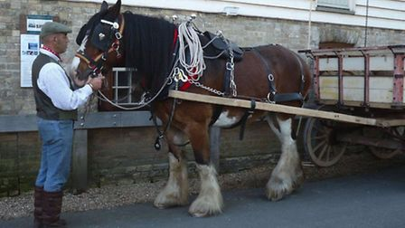A carthorse waiting outside Stotfold Mill as grain is delivered