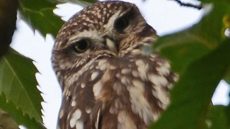 Find out all about owls at the Letchworth RSPB session